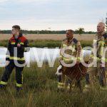 Brandweer Klazienaveen in actie voor wegzakkende dieren in moeras